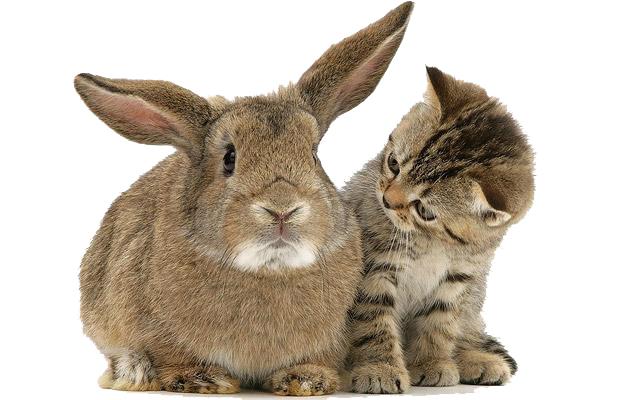 gato_conejo